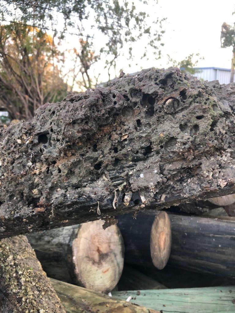 Dock Repair - Pile Damage